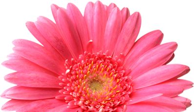 Real Flowers Png Png Real Flowers | www...