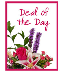 Deal of the Day In Waterford Michigan Jacobsen's Flowers