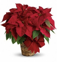 Poinsettia Basket In Waterford Michigan Jacobsen's Flowers