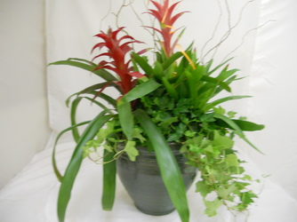 Tropical Bromiliad for Fathers Day In Waterford Michigan Jacobsen's Flowers