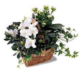 White Assortment Basket In Waterford Michigan Jacobsen's Flowers