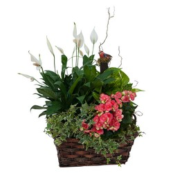 Living Blooming  Garden Basket  In Waterford Michigan Jacobsen's Flowers
