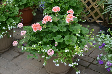 Patio Planters In Waterford Michigan Jacobsen's Flowers
